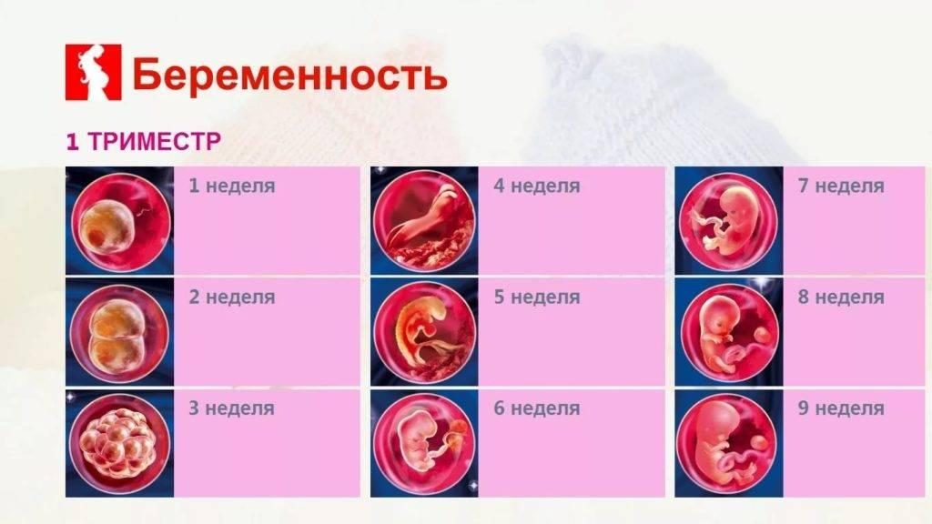 Второй (2) триместр беременности: с какой недели начинается, как развивается плод, советы врачей