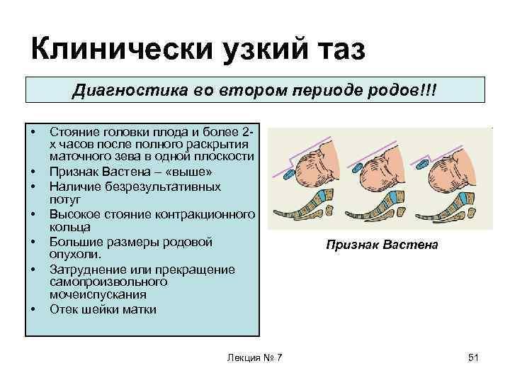 Маловесный плод - патология или особенность конституции? норма веса плода по неделям