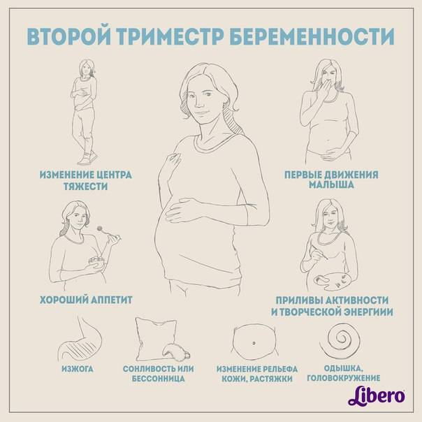 Второй триместр – период расцвета беременности