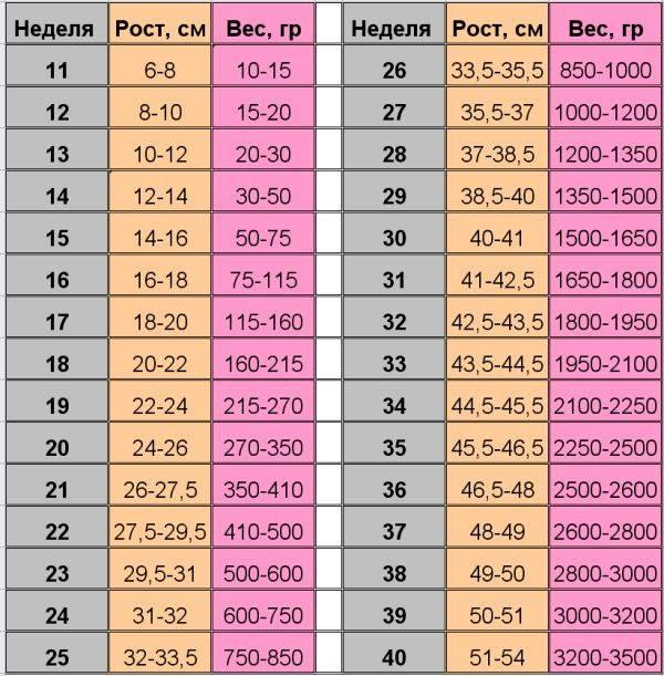 Узи на 32 неделе беременности: расшифровка, норма размеров плода по таблице