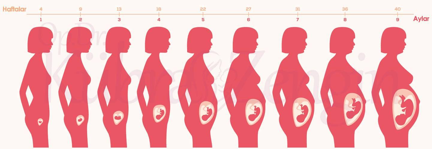 Пятый месяц беременности