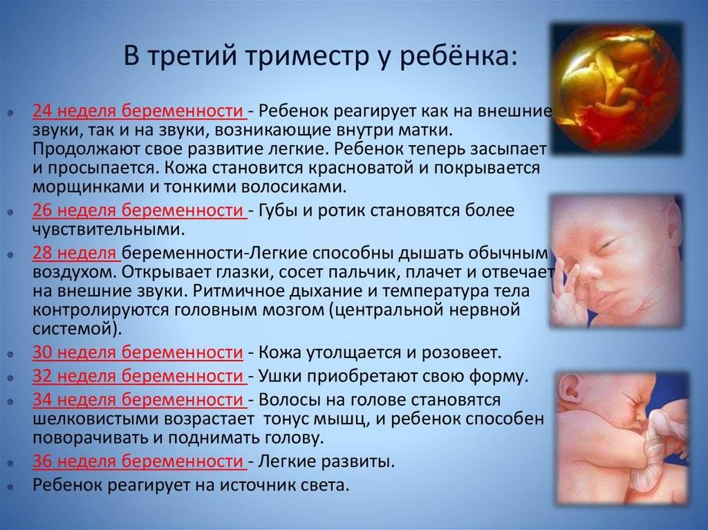 Второй скрининг при беременности: что показывает и как читать результаты