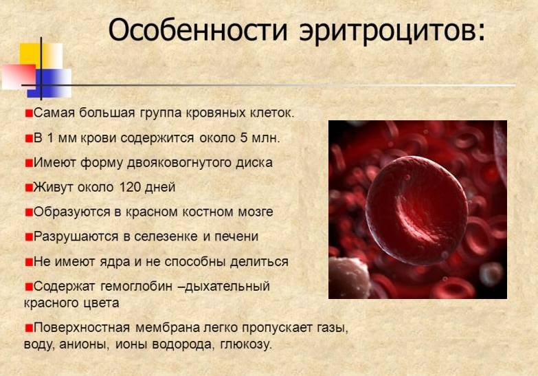 Повышенные эритроциты в крови у ребенка: что это значит?
