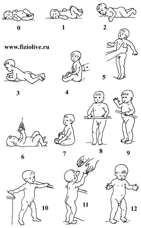 Гимнастика для детей до года: комплексы упражнений   мамины шпаргалочки