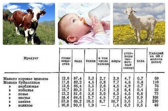 С какого возраста можно давать молоко