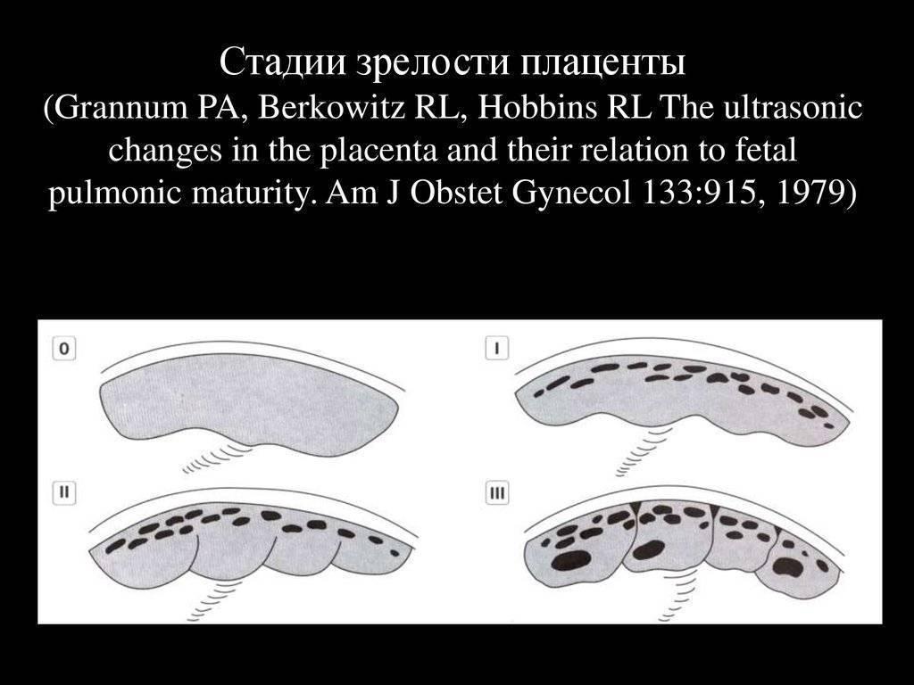Что такое плацента