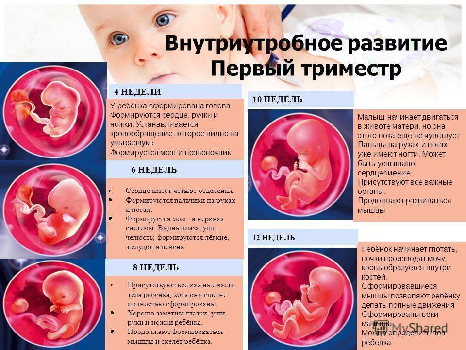 Что показывает узи по неделям беременности