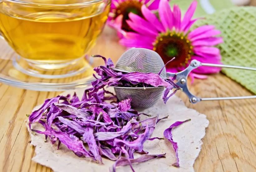 Трава иван чай (кипрей) лечебные свойства