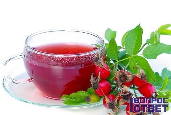 Шиповник при гв: можно ли пить первый месяц, чай, отвар и компот