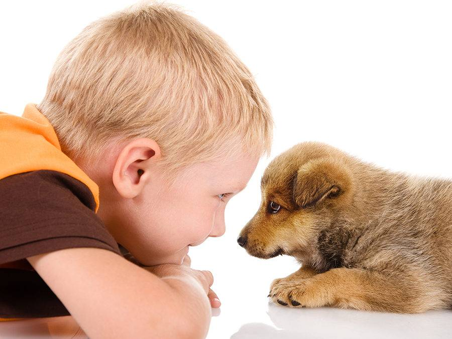 Роль питомца в жизни ребенка. дети и домашние животные.