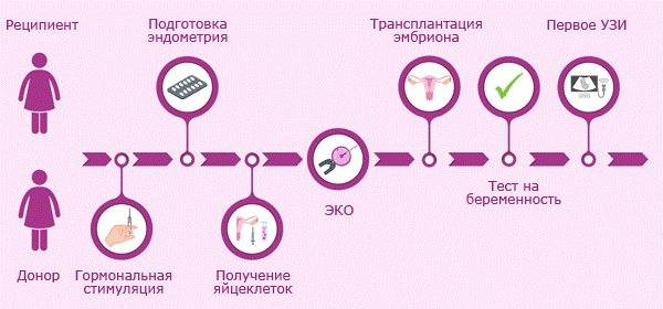 Стать донором яйцеклетки в москве в клинике gms эко: цены на донорство ооцитов