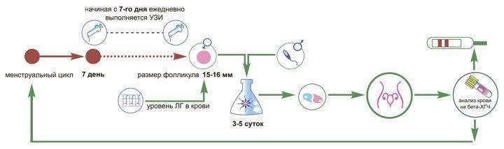 ЭКО без гормональной стимуляции в естественном цикле