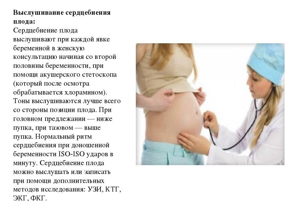 Этапы развития эмбриона   когда начинает биться сердце эмбриона