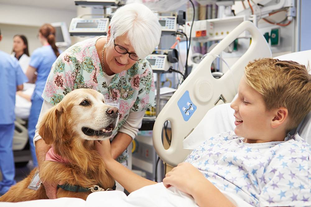 Гирудотерапия: польза и вред, показания и противопоказания лечения пиявками