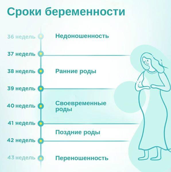 Сколько недель длится беременность