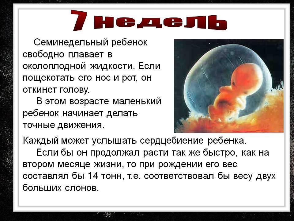 Что происходит на 7 акушерской неделе беременности с малышом и мамой? 7 неделя, отзывы