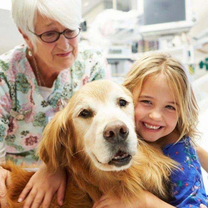Анималотерапия для детей, взрослых и пожилых людей