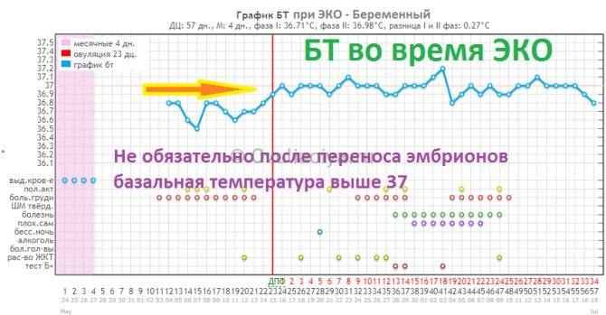 Особенности температуры после переноса эмбриона при ЭКО