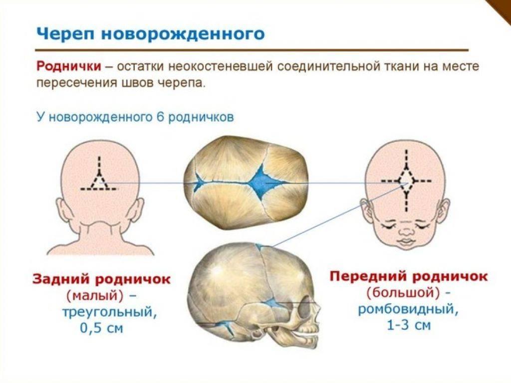 Почему не зарастает родничок у младенца? | анатомия что делать, если не зарастает родничок? | анатомия