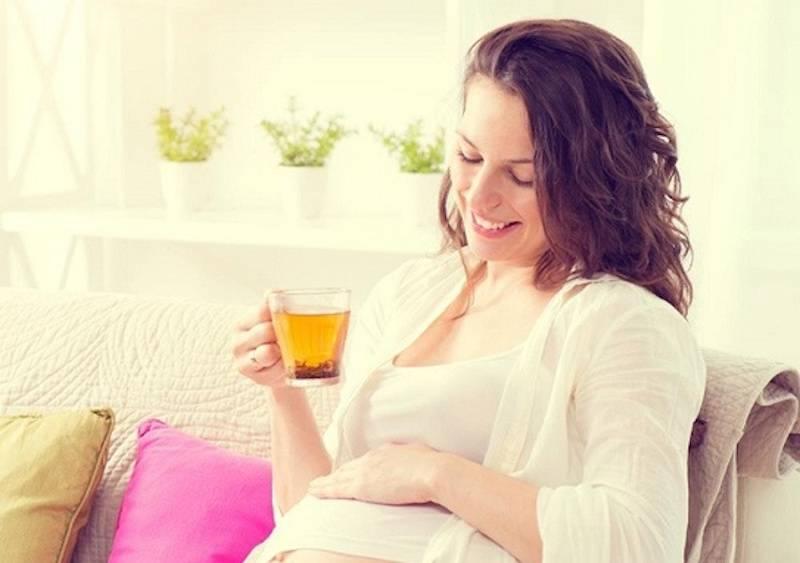Мелисса при беременности — польза, противопоказания и риски употребления
