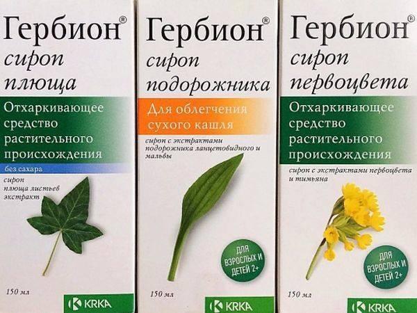Семена подорожника - лечебные свойства, применение, противопоказания, шелуха