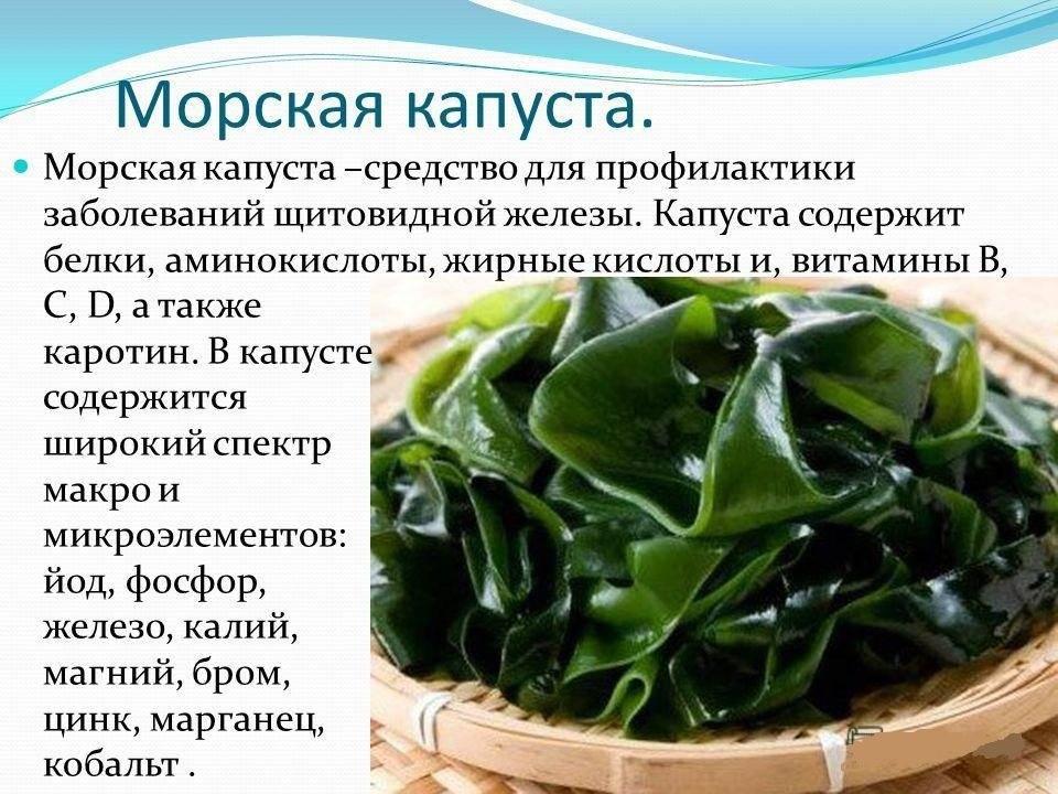 Морская капуста: польза и вред, лечебные свойства и витамины