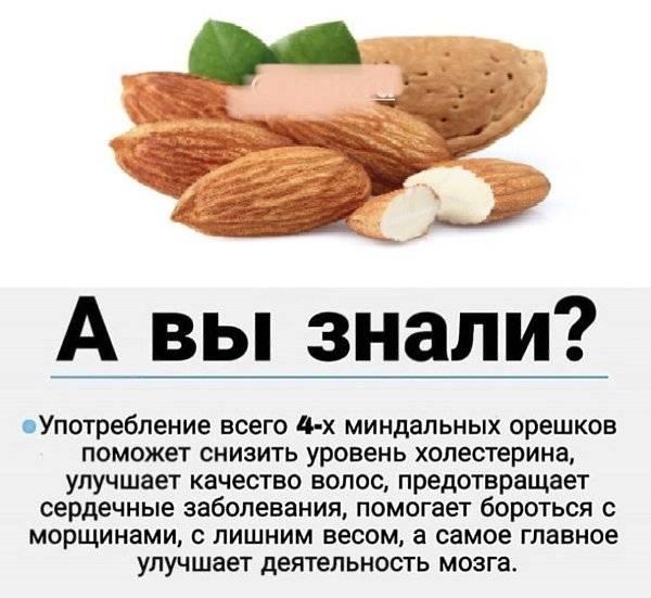 Польза и вред миндаля при беременности. можно ли есть орехи миндаль во время беременности — беременность. беременность по неделям.