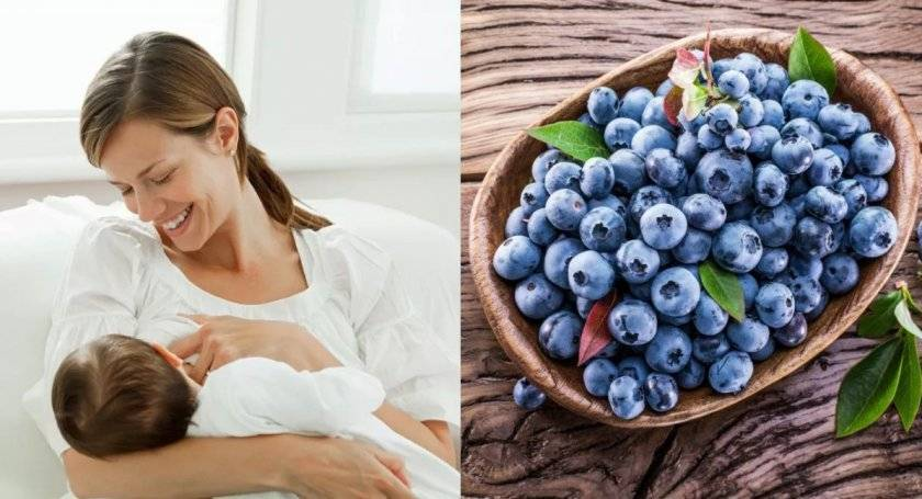 Можно ли беременным калину, бруснику, чернику, голубику? полезные свойства и противопоказания при беременности калины, брусники, черники, голубики