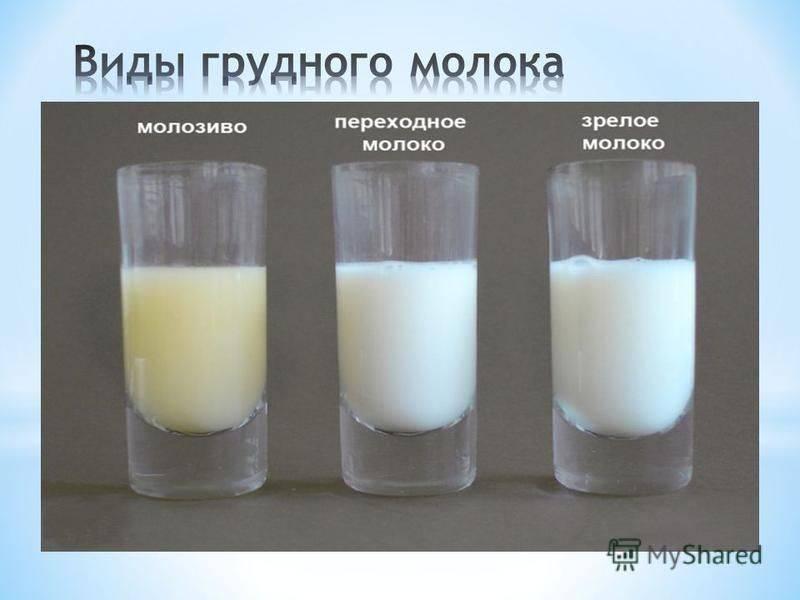 Как определить жирность молока у коровы: от чего зависит