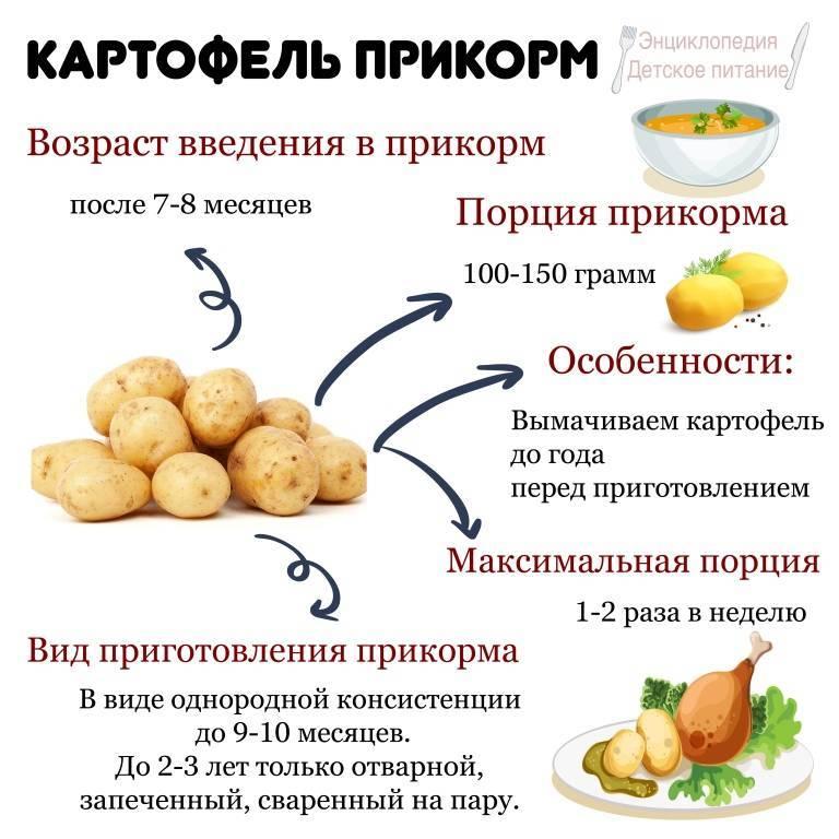 С какого возраста можно давать ребенку картошку, а именно со скольки месяцев вводить в прикорм грудничку, как вымачивать картофель и приготовить для первого раза?