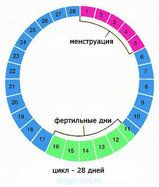 Фертильные дни - что это значит, окно фертильности в женском календаре, можно ли забеременеть в этот период