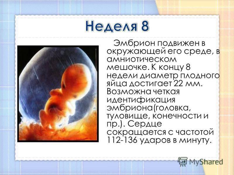7 неделя беременности: что происходит на этой неделе?