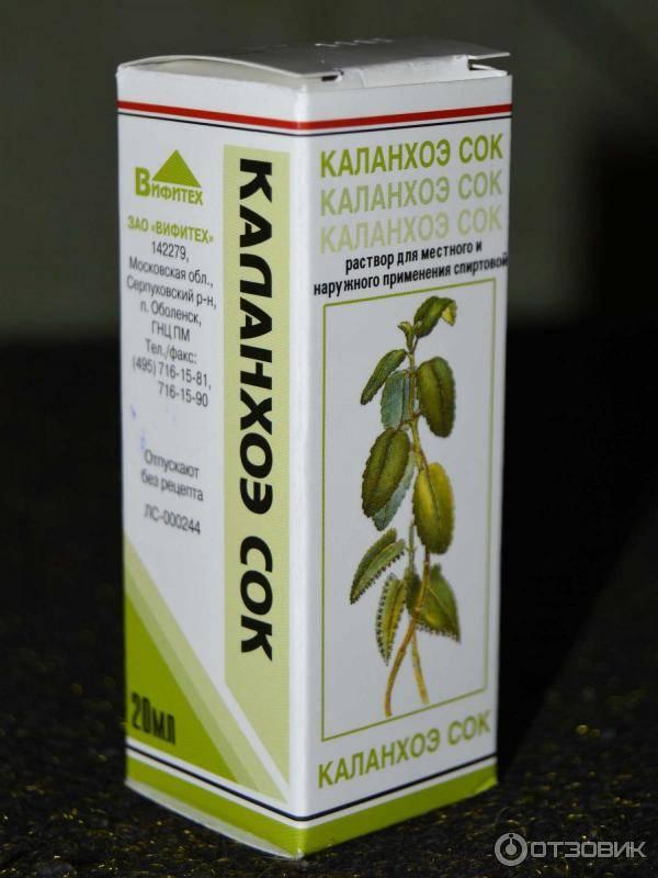 Каланхоэ - применение и лечение, польза и вред. сок каланхоэ
