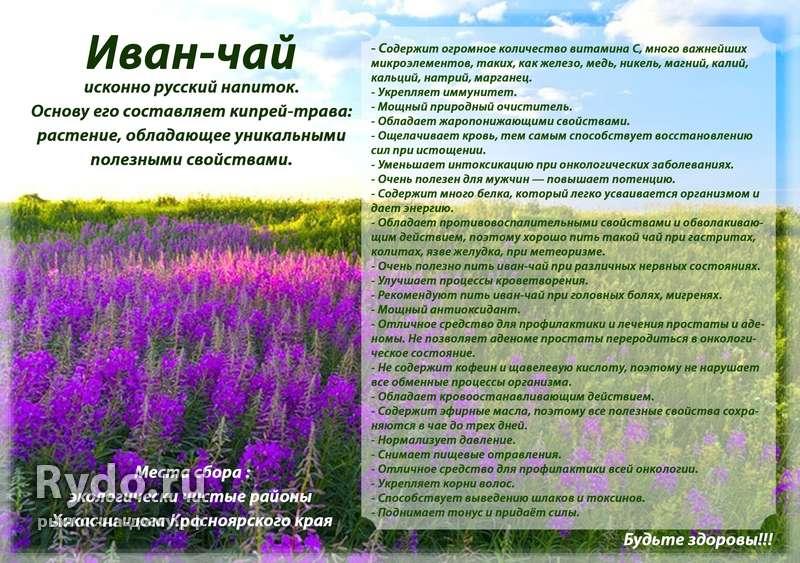 Крапивный чай: польза и вред для здоровья – lifekorea.ru