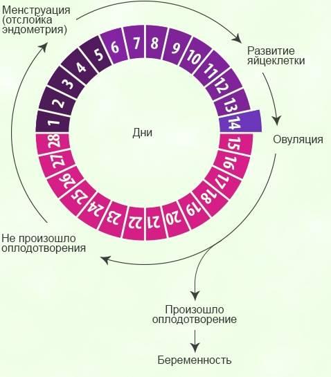 Фертильность: полезные сведения