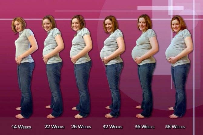 6 месяц беременности – что происходит, развитие плода и ощущения в животе на шестом месяце беременности - agulife.ru