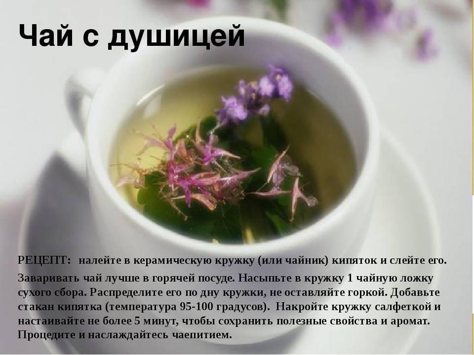 Иван чай:  полезные лечебные свойства и противопоказания, применение, как правильно заваривать и пить