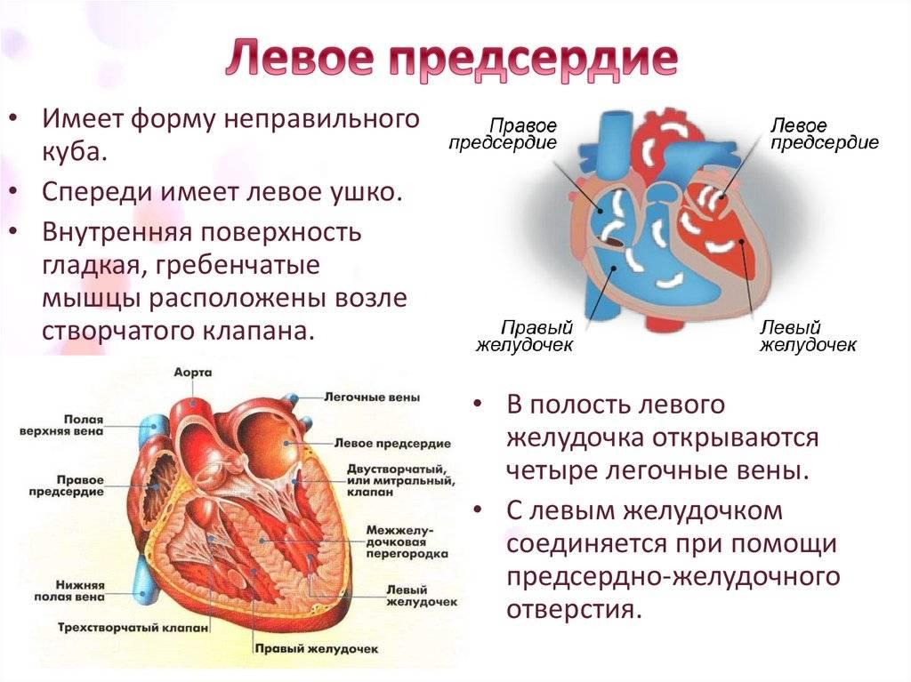 Эхокардиография при дефекте межжелудочковой перегородки – узи в красноярске