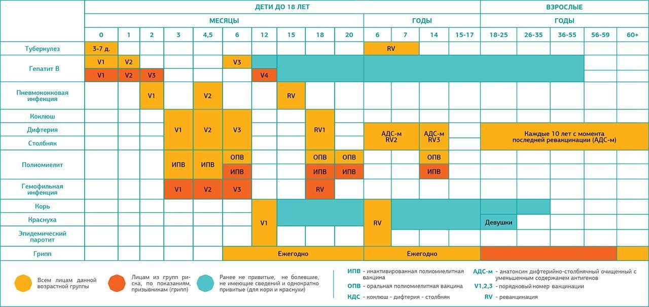 Календарь прививок в украине - график вакцинации - лдц медичної академії