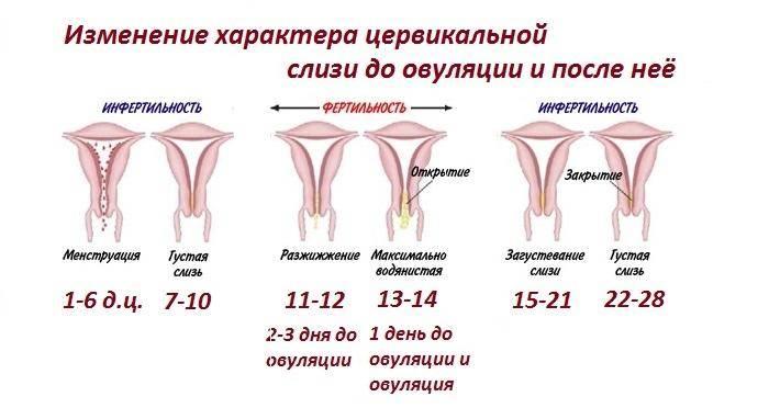 Выделения у женщин — нормальные и при гинекологических заболеваниях