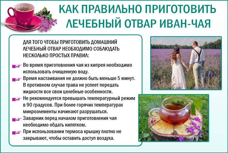 Иван-чай при грудном вскармливании: полезные свойства и рецепты заваривания