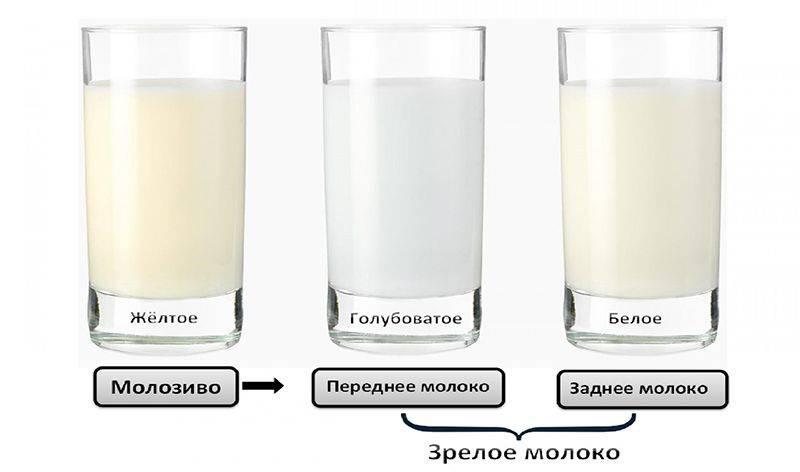 Стоит ли волноваться кормящей маме по поводу уровня жирности грудного молока? как проверить процент жира в молоке дома?