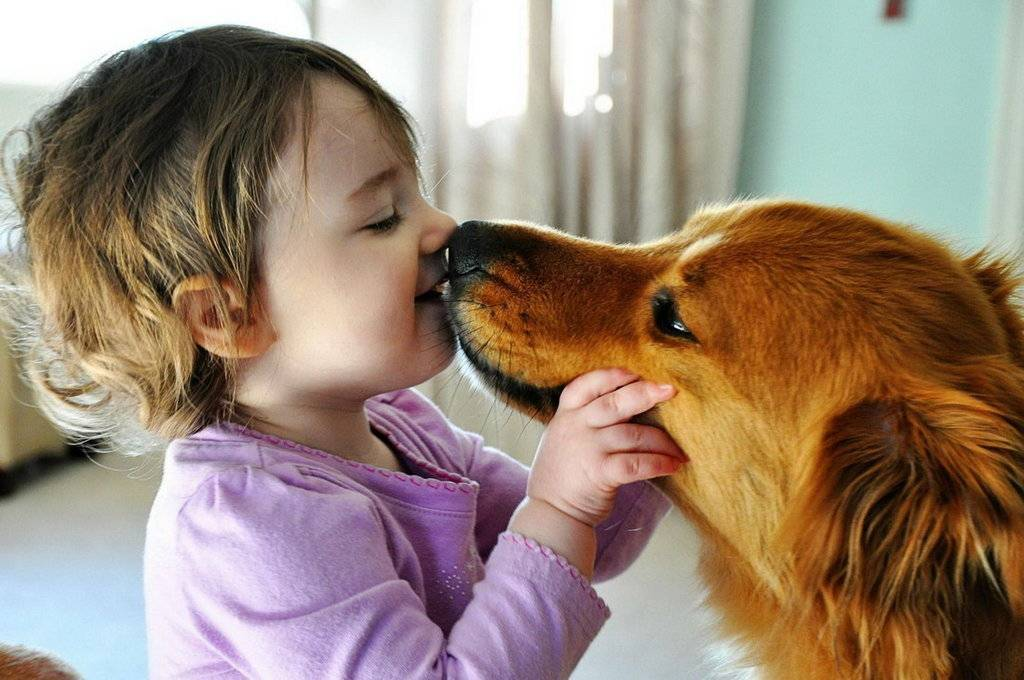 Дети и домашние животные: плюсы и минусы   medical note