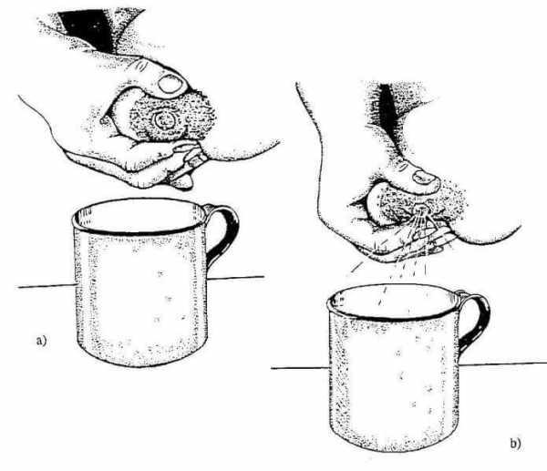 Как сцеживать грудное молоко вручную: 9 шагов