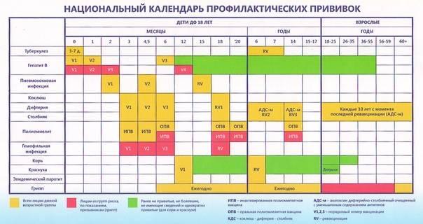 График прививок по возрасту – схемы для детей до года и после 3 (трех) лет: календари, таблицы обязательных в россии вакцинаций, какие делают с рождения по месяцам - интернет-канал «tv губерния»