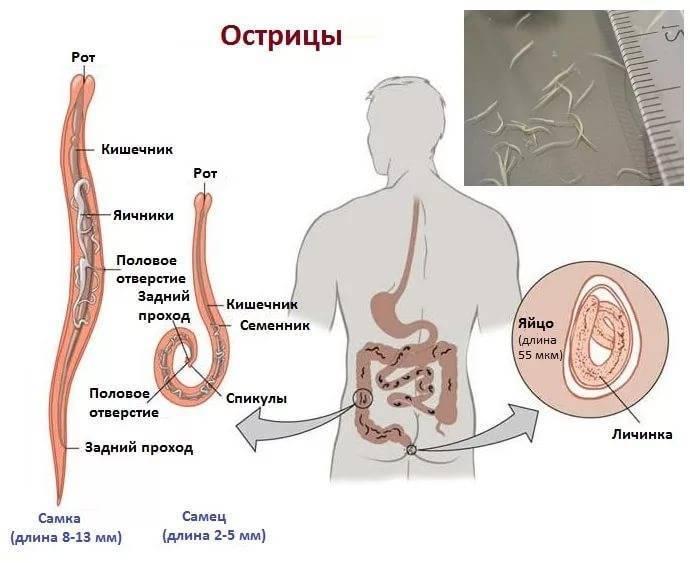 «симптомы эпилепсии— это нетолько судороги иобмороки». разбираем сневрологом мифы оболезни