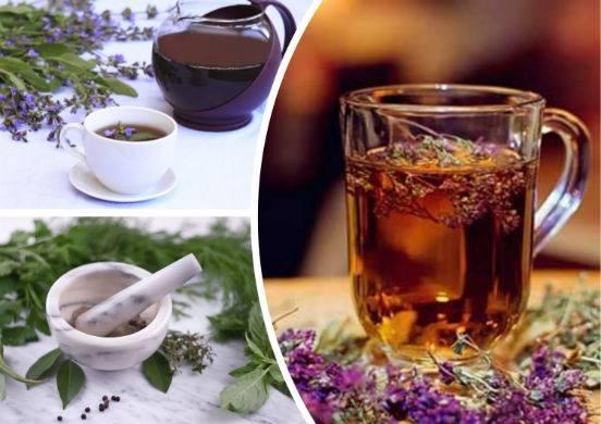 Шалфей для прекращения лактации: чай, отвар, масло — как применять?