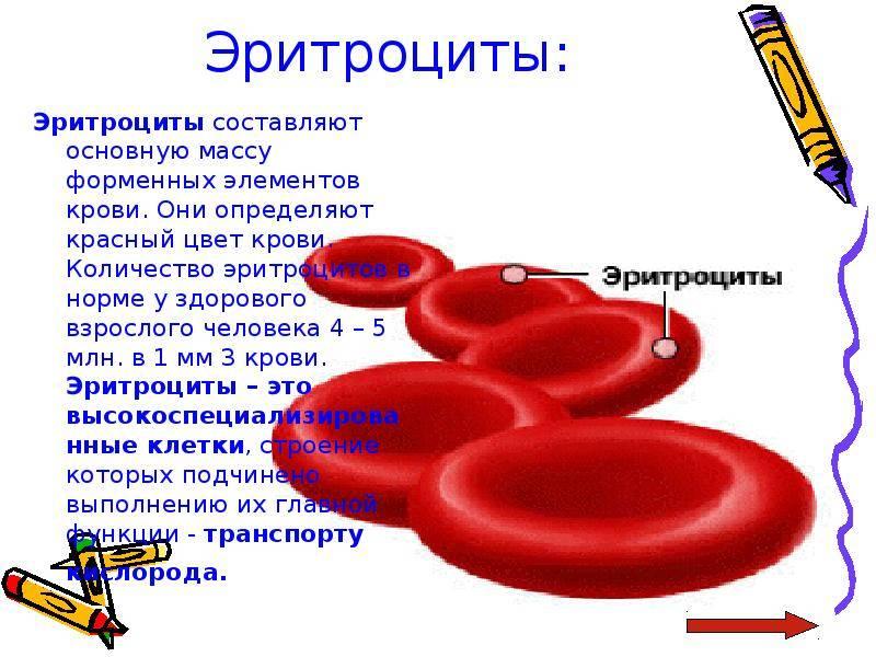 Норма эритроцитов в крови у женщин