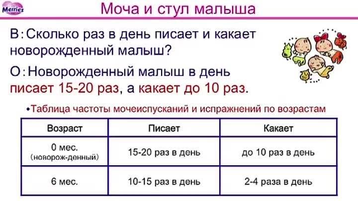Сколько ребенок должен ходить в туалет | главный перинатальный - всё про беременность и роды