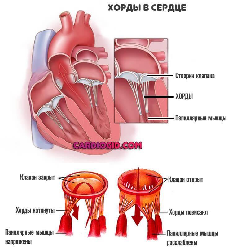 Ультразвуковая семиотика и диагностика в кардиологии детского возраста